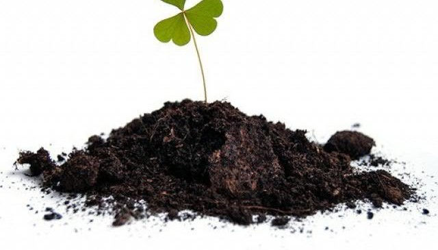 Какая почва даст наибольший урожай – перегной или чернозем?